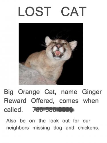 Lost Cat poster with photo of mountain lion