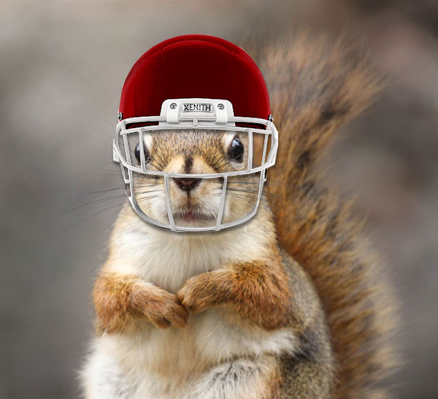 Photo - squirrel wearing football helmet