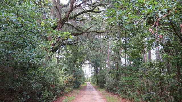 View down unpaved road