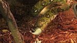 Python enjoying a white furry meal