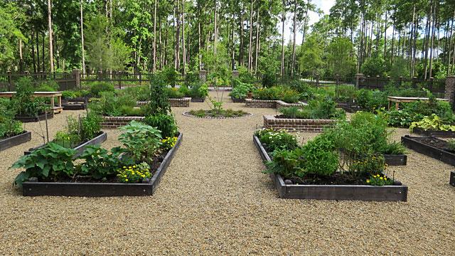 The community vegetable garden