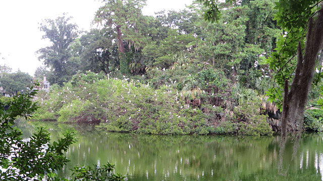 Photo - Egret Sanctuary