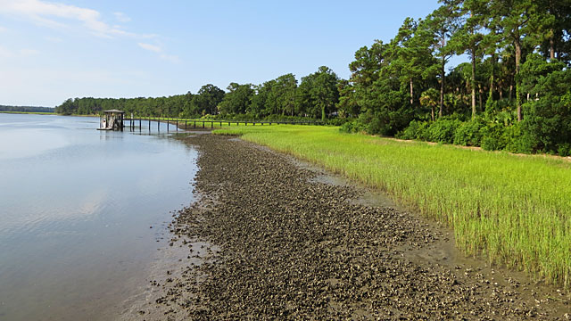 Oyster beds at low tide