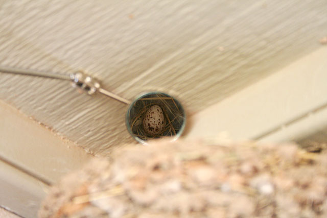 Photo of barn swallow egg reflected in mirror
