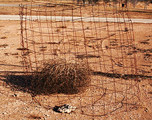 Tumbleweed in a cage