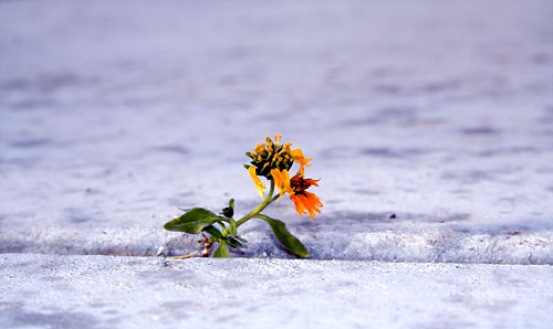 Photo of flower growing in concrete