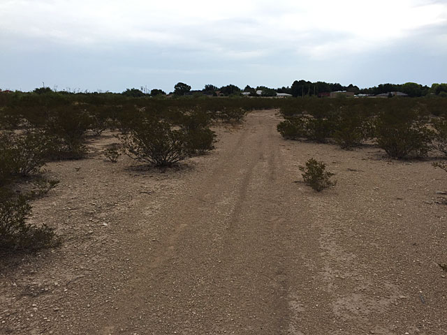 Trail through mesquite and creosote