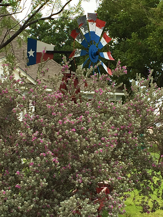 Red, white & blue windmill behind purple sage