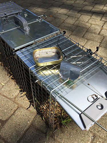 Photo - The trap and remnants of the sardine can