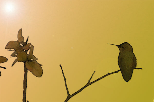 Stylized photo of a hummingbird