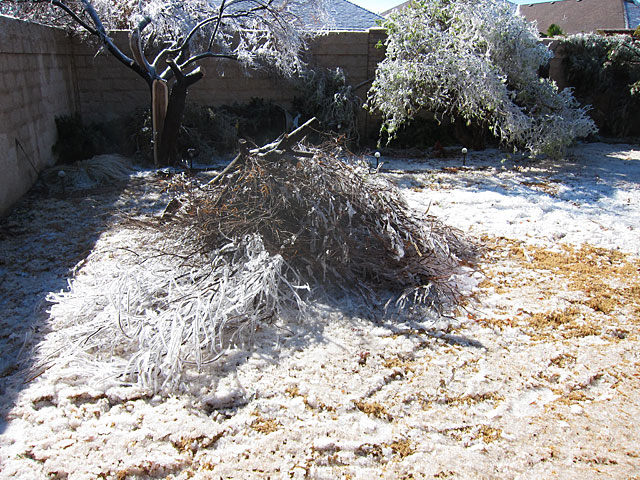 Desert willow limbs piled up