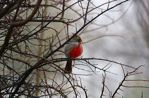 Photo - bird in tree