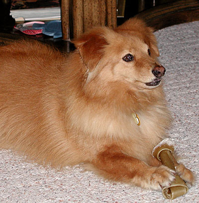 Photo of Abbye with a bone
