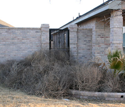 Photo of tumbleweeds piled on front porch