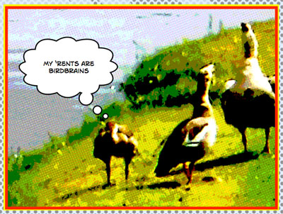 Comic strip - Goose Family