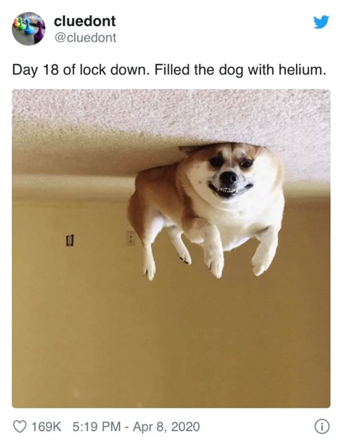 Helium-filled dog lockdown meme