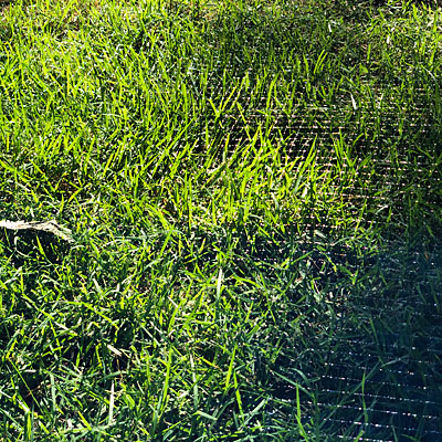 Photo - bird netting covering a section of lawn
