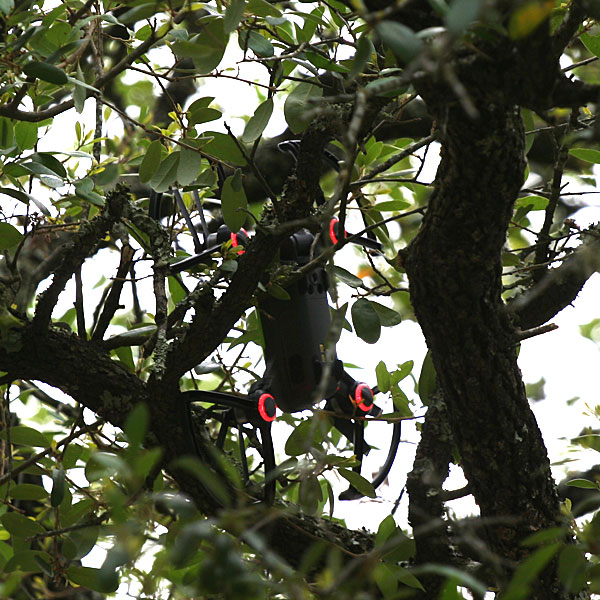 Photo - Drone trapped in tree