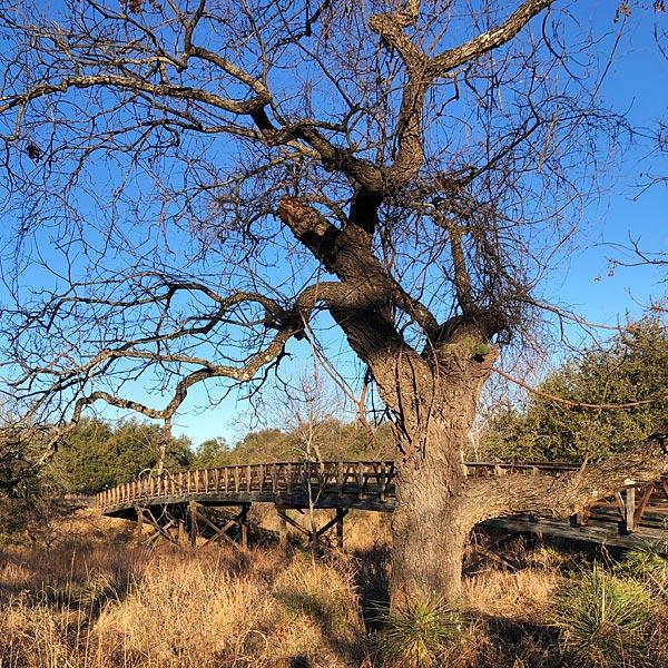 Photo - The wooden bridge over Pecan Creek between Summit Rock #14 & #15