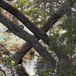 Trees along Horseshoe Creek, Horseshoe Bay, Texas