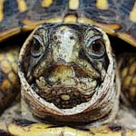 Turtle, up close and personal