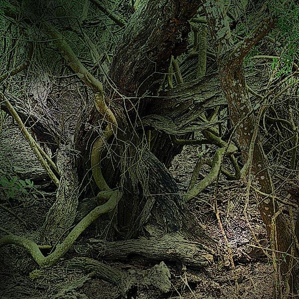 Photo - Gnarled trees at Atascosa Wildlife Refuge