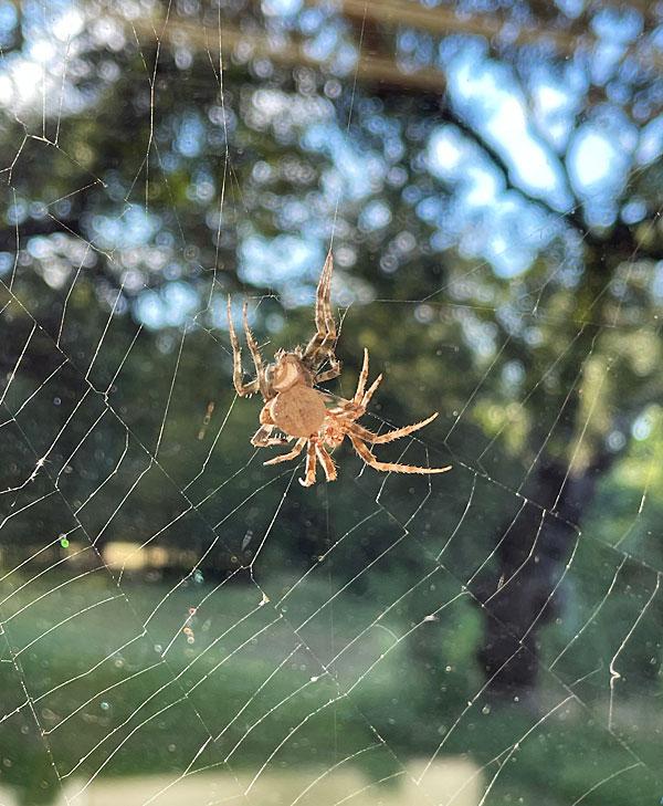 Photo - Spider molt - unknown species