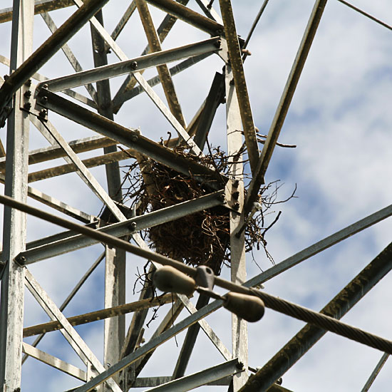 Photo - Close-up of crows nest on electrical tower