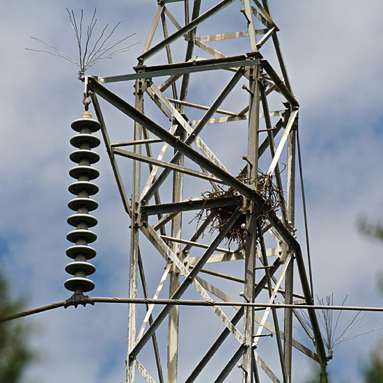 Photo - Crows nest on electrical tower