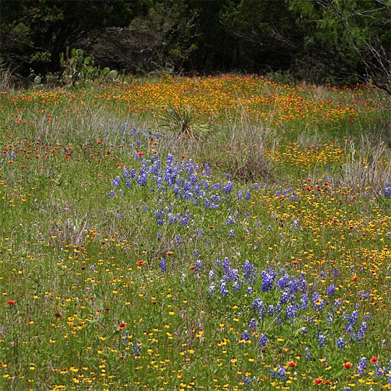 Photo - Wildflowers in a field