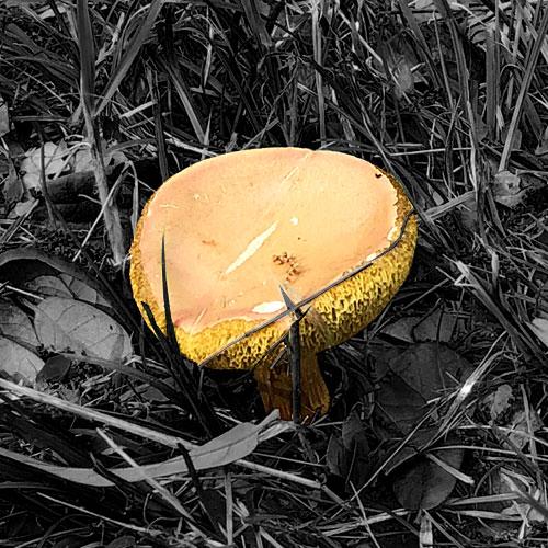 Photo - Mushroom