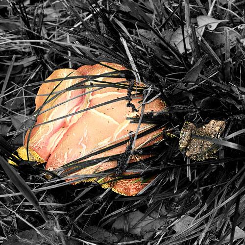 Photo - Mushroom and tiny frog